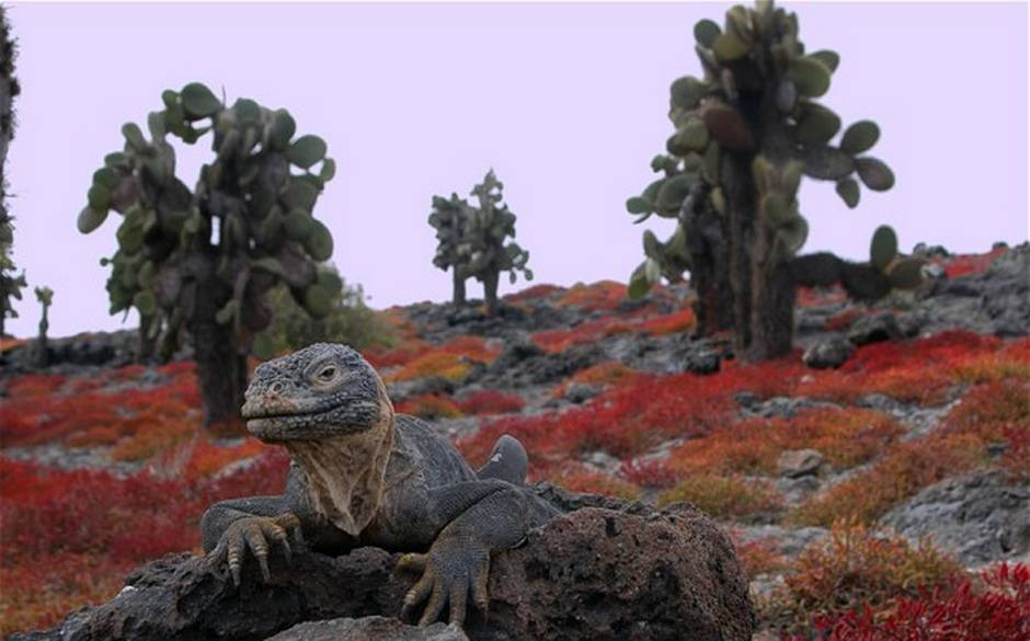 Galapagos-Islands | Places to See Before It's Too Late