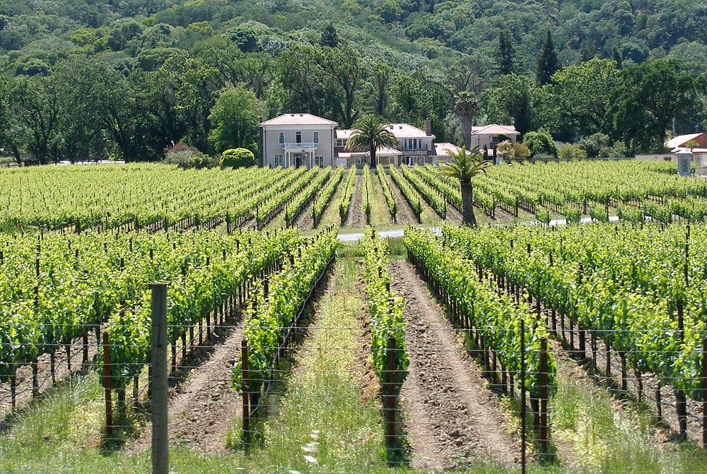 Mendocino_vineyard | Places to See Before It's Too Late