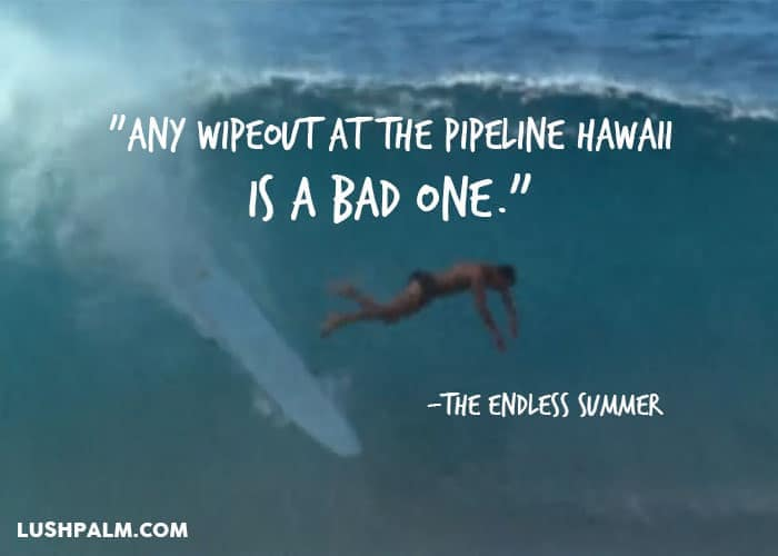 Quotes From The Endless Summer