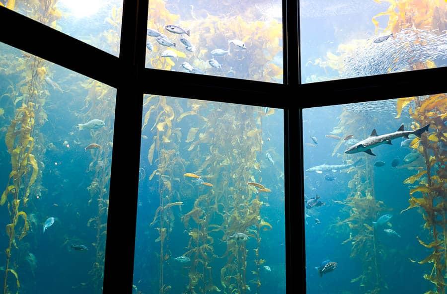Monterey Bay Aquarium, Monterey, California / RTW SURF TRIP 02 / FROM ENCINITAS TO SAN FRANCISCO