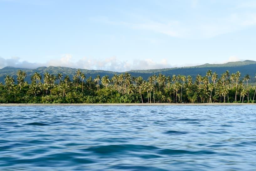 samoa lush palms