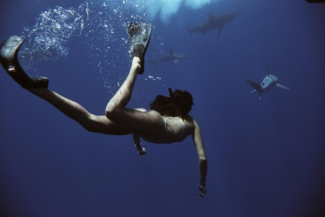 best things to do in oahu - swim with sharks