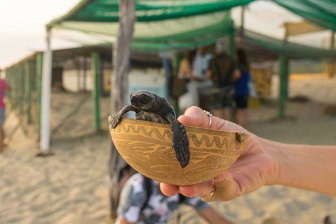 releasing sea turtles in Puerto Escondido